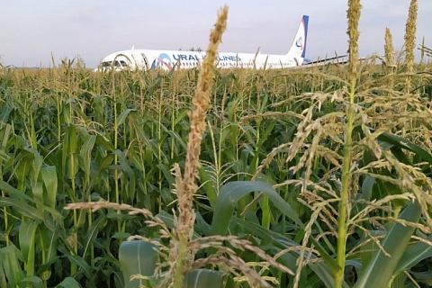 Аварийная посадка А321 нанесла ущерб посевам кукурузы