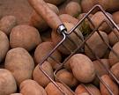 Названы условия разрешения ввоза картофеля изЕгипта
