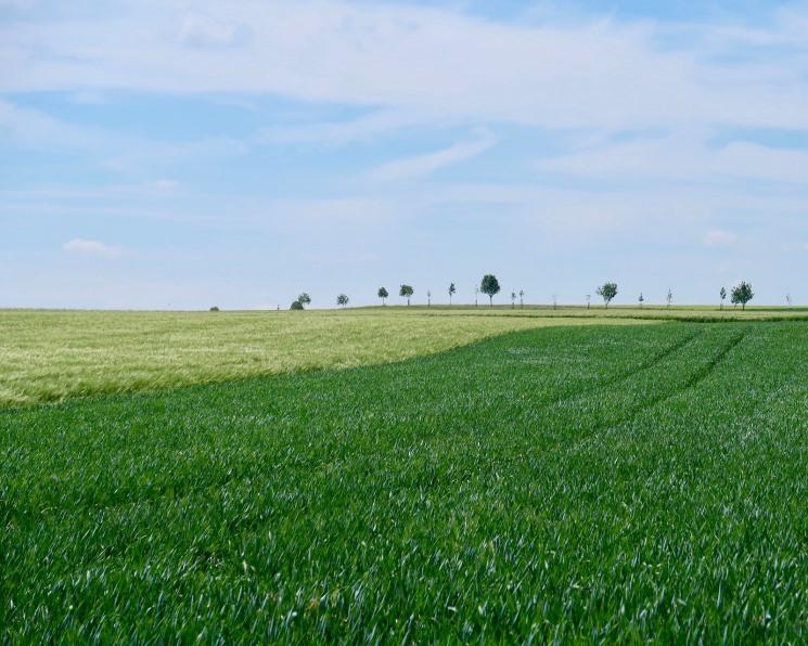 Рейтинг землевладельцев вновь возглавили «Продимекс», «Мираторг» и«Русагро»