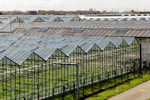 Группа «Рост» построит теплицы в Ленинградской области