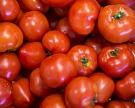 Правительство разрешит импорт турецкой сельхозпродукции