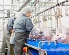 Россия произвела пробные поставки мяса индейки в Нидерланды