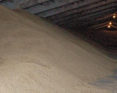 Россия может снизить экспорт зерна вфеврале
