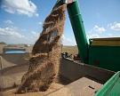 Сбор зерновых достиг 95,6 млн тонн