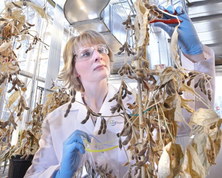 Определены первые семь компаний, которым передадут технологии Bayer
