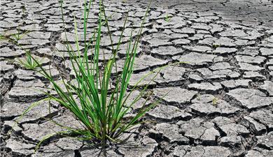 Четвертая засуха подряд