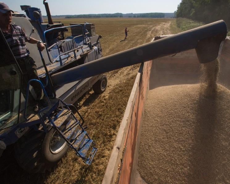 Запасы зерна достигли рекордных 58 млн тонн