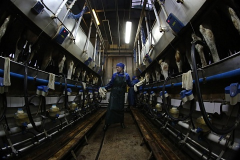 Опрос: как растет производство молока