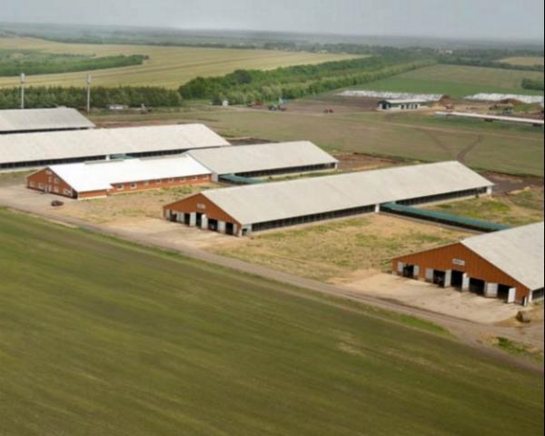 «ЭкоНиваАгро» открыла в Воронежской области восьмой животноводческий комплекс на 2,8 тыс. коров