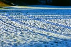 НСА: грядущее похолодание может угрожать озимым культурам