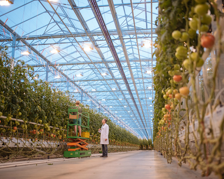 Топ-11 теплиц России. В стране произведен миллион тонн овощей