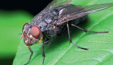 Гормональная терапия для мух