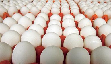 Яйцо внатуре