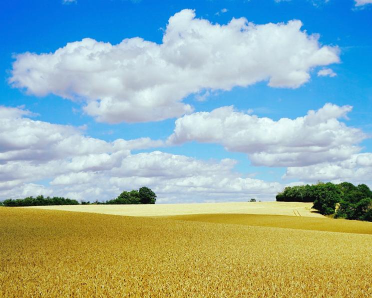 Российская пшеница занеделю резко подорожала