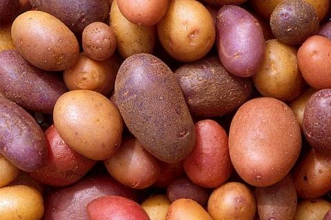 Урожай картофеля ожидается на уровне 7 млн тонн