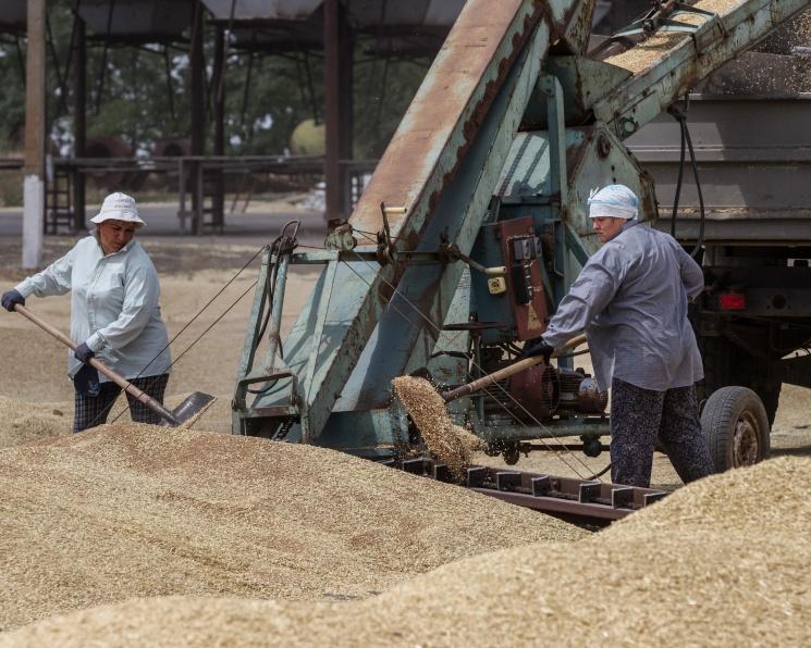 На смерть зерновых интервенций: понятные правила игры важнее господдержки