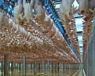 В 2015 году экспорт мяса увеличился на 10%