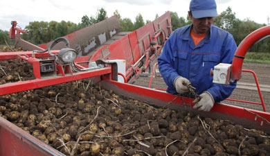 Картофельная школа