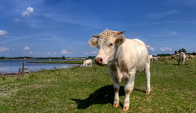 ВКурганской обл. разработают новую программу животноводства