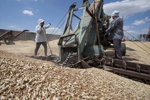 Минсельхоз предложил цены для зерновых интервенций