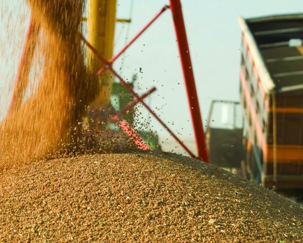 Квота на экспорт зерна составит 7 млн тонн