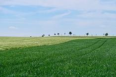 Рейтинг землевладельцев вновь возглавили «Продимекс», «Мираторг» и «Русагро»