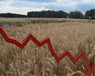 Рынок пшеницы продолжил падение