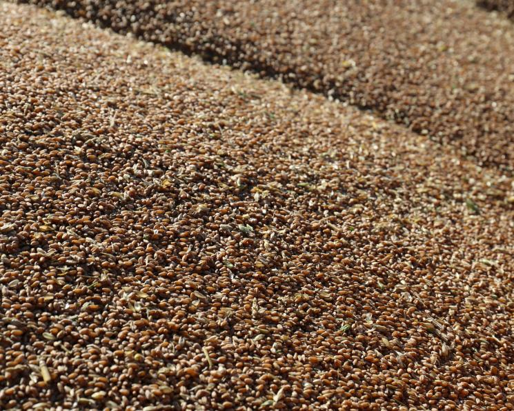 Цены напшеницу опустились доминимума сосени 2014 года