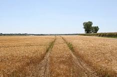 Сельхозпроизводство в 2018 году сократилось на 0,6%