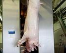 Определены 20 крупнейших производителей свинины в России