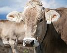 Чтобы выйти насамообеспеченность помолоку к2020 году нужно построить 800 ферм