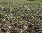 Украина ввела санкции против «Агрокомплекса» им. Н. Ткачева