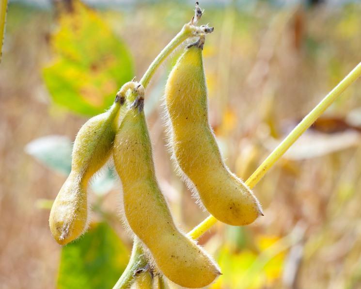 Выращиваем и удобряем. Растущие площади посевов сои требуют все больше СЗР