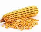 «НьюБио» вложит 5,6 млрд рублей в переработку кукурузы