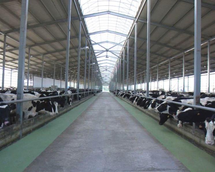 «Степь х молоко» совместно с китайскими компаниями вложит 45млрдруб. в строительство молочно-товарных ферм