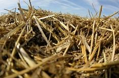 Минсельхоз повысил прогноз экспорта пшеницы