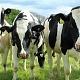 «ЭкоНива» начала покупать фермы