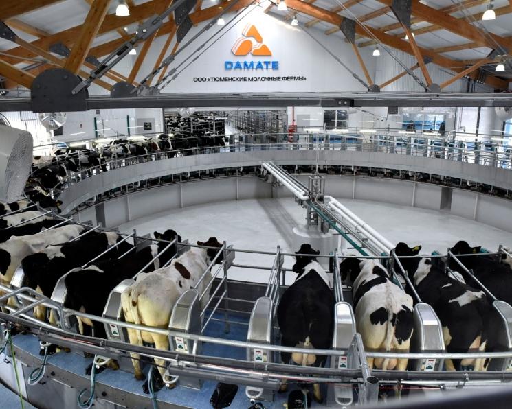 Оцифрованная ферма. Как современные технологии повышают рентабельность животноводческого предприятия