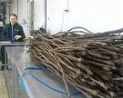 Винный холдинг «Ариант» открыл питомник попроизводству виноградных саженцев