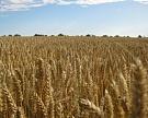 Земельный банк «Агрокомплекса» превысит 600 тыс. га