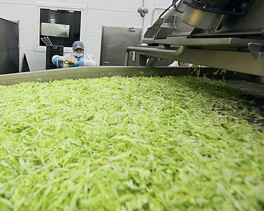 «Белая Дача» в течении двух-трех лет намерена полностью отказаться от импорта салата айсберг