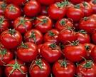 Турция готова возобновить поставки томатов с октября