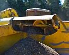 Алтай соберет не меньше 350 тыс. тонн гречихи