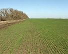 Под урожай-2015 засеют 79,4 млн га