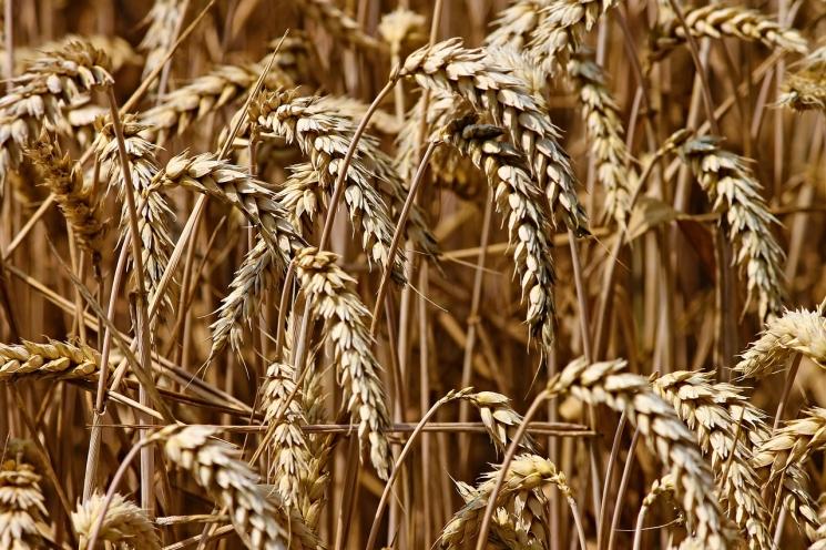 Торги интервенционным зерном приостановлены