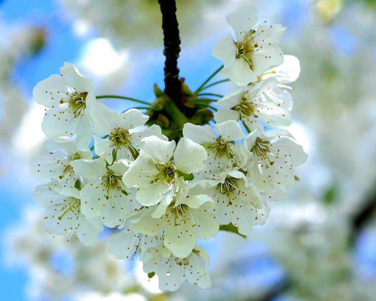 «Белый сад» инвестирует 2,5 млрд рублей впроизводство яблок