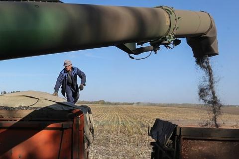 Рекордный урожай подсолнечника провоцирует падение цен