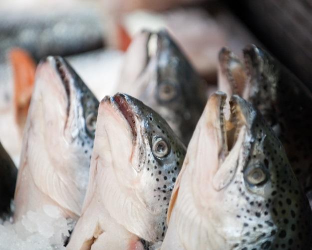 Минпромторг признал 50% рыбы нарынке фальсификатом