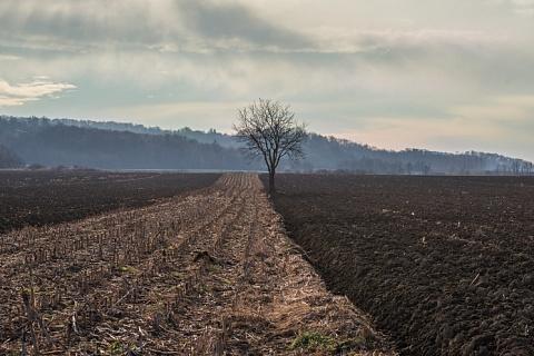 Минсельхоз предложил субсидировать известкование почв