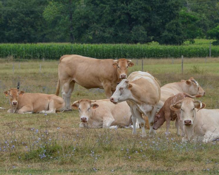 В январе сельхозпроизводство выросло на 2,9%